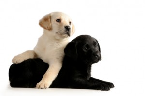 Protect Wood Floors from Pets