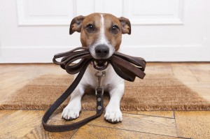 Stop Your Dog Scratching Hardwood Floors